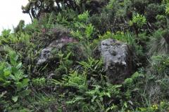 Açores-(11)