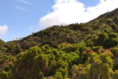 Açores-(51)