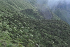 Açores-(12)