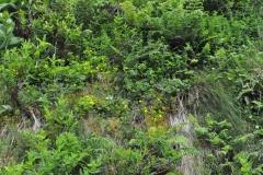 Açores-(27)