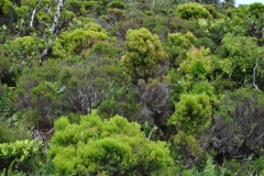 Açores-(64)