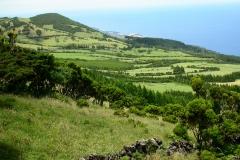 Pico-(1)